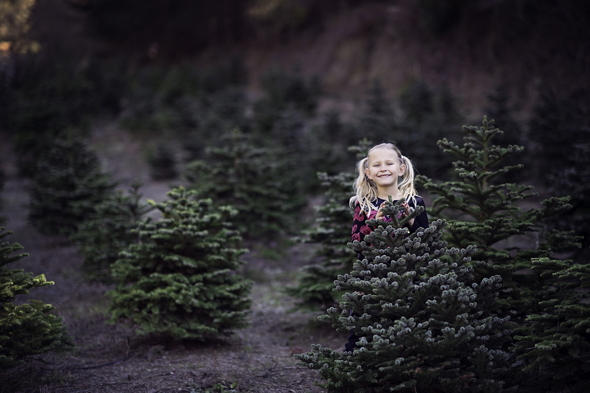 santa's tree farm family mini session bay are