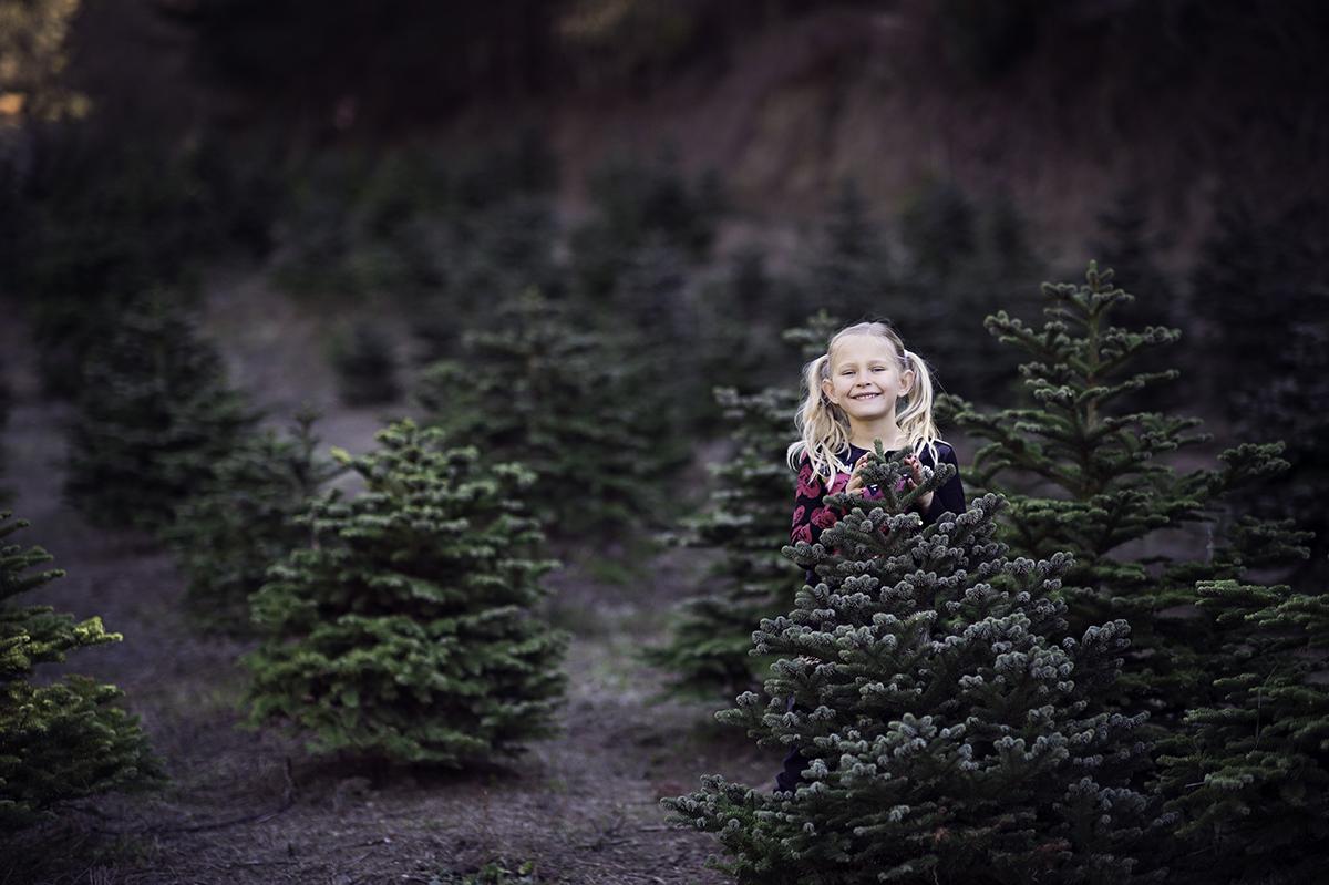 santa's tree farm family mini session bay are